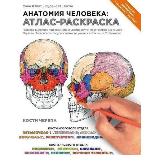Анатомия человека. Атлас-раскраска цена