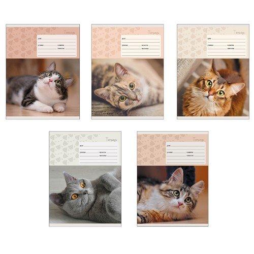 Тетрадь Мой котик А5, 24 листа, в линейку, ассортименте