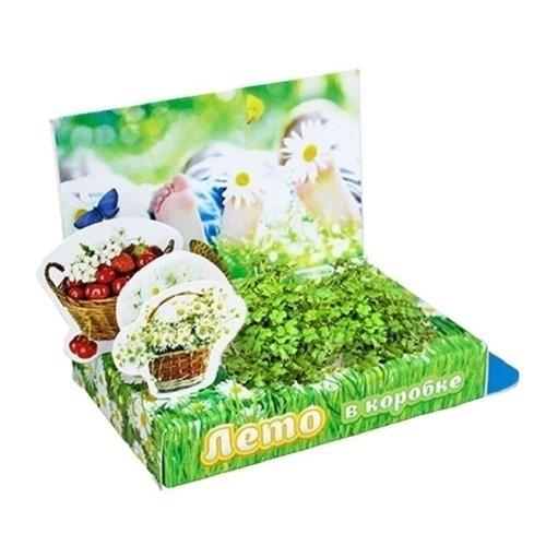 Набор для выращивания Живая открытка - Лето в коробке набор подарочный для выращивания happy plants живая открытка лето в кармане